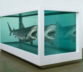 Hirsts Shark